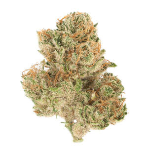 buy destroyer strain online , shop for destroyer strain online, order destroyer marijuana strain online, get destroyer strain online near me, destroyer marijuana strain for sale online,